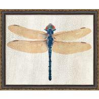 Dragonfly 1 22W X 18H