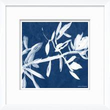 Cyanotype Blues VI 15W x 15H