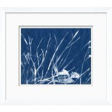 Cyanotype Blues VII 16W x 14H